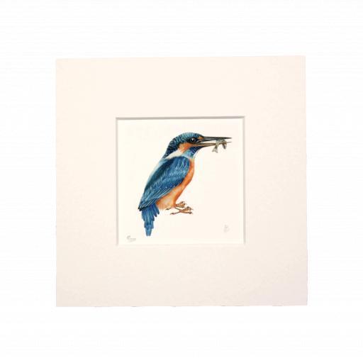 Kingfisher Mini Print