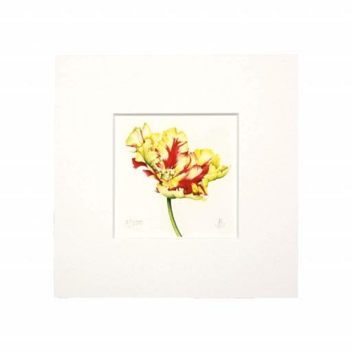Texas Flame Tulip (Open) Mini Print