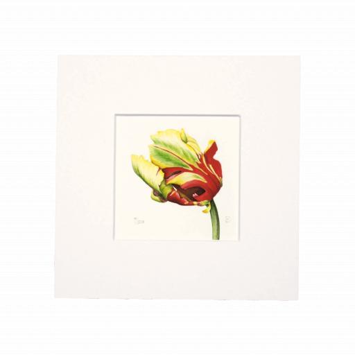 Texas Flame Tulip (Side) Mini Print