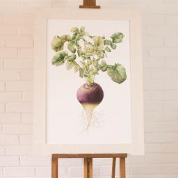 turnip large framed.jpg
