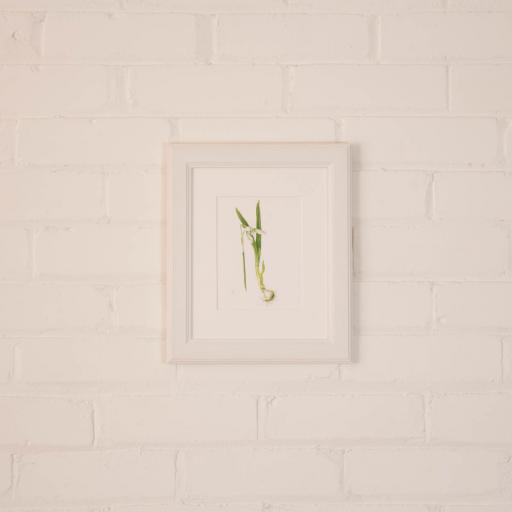 snowdrop small framed.jpg