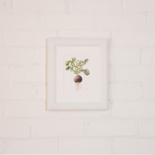 turnip small framed.jpg